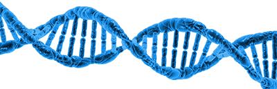 clonación capilar ADN MicroFue