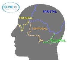 anatomía de la cabeza trasplante capilar zona frontal